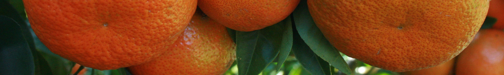 Southern Fruit Growers